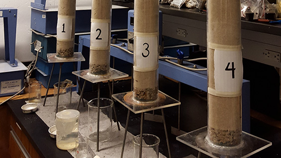 Soil columns used in Hailey Kim's bioremediation research. Photo courtesy Hailey Kim