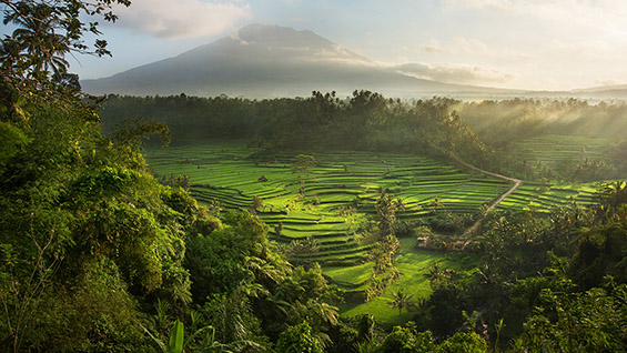 The Subak: Mahadiri Rice Terraces, Bali, Indonesia. Image courtesy of David Lazar.