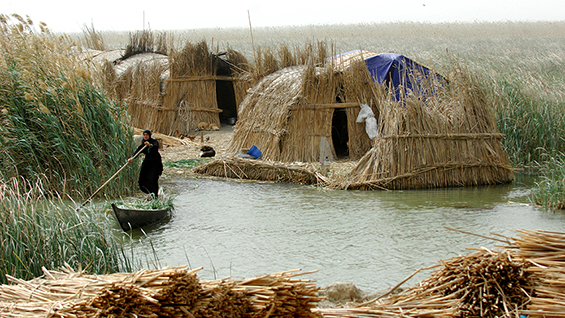 Mudhif houses of the Ma'dan, southern wetlands, Iraq. Image courtesy of Esme Allen.