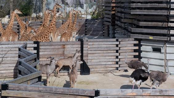 Bernard Tschumi Architects, Le Parc Zoologique de Paris | photo by Iwan Baan