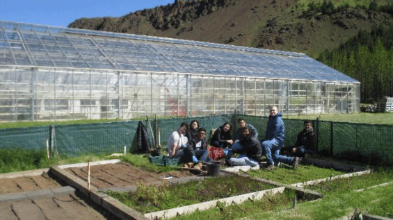 Agricultural University of Iceland, Hveragerdi,  Iceland, working in heated garden
