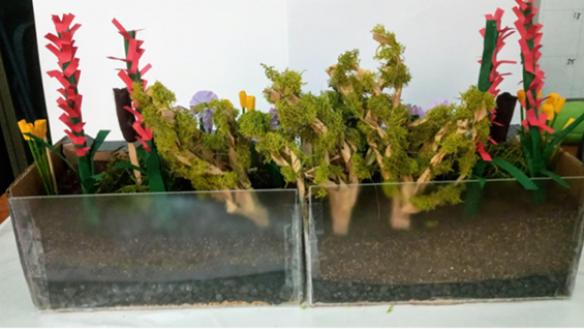 Rain garden model