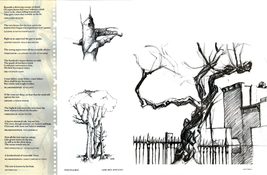 architecture drawing trees - Architecture Drawing Of Trees