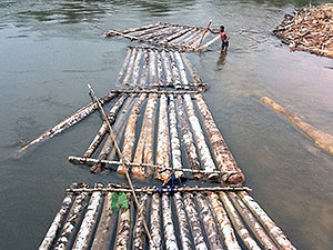 Bamboo rafts in Bakassi